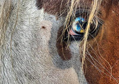 cavalli-gallery.6